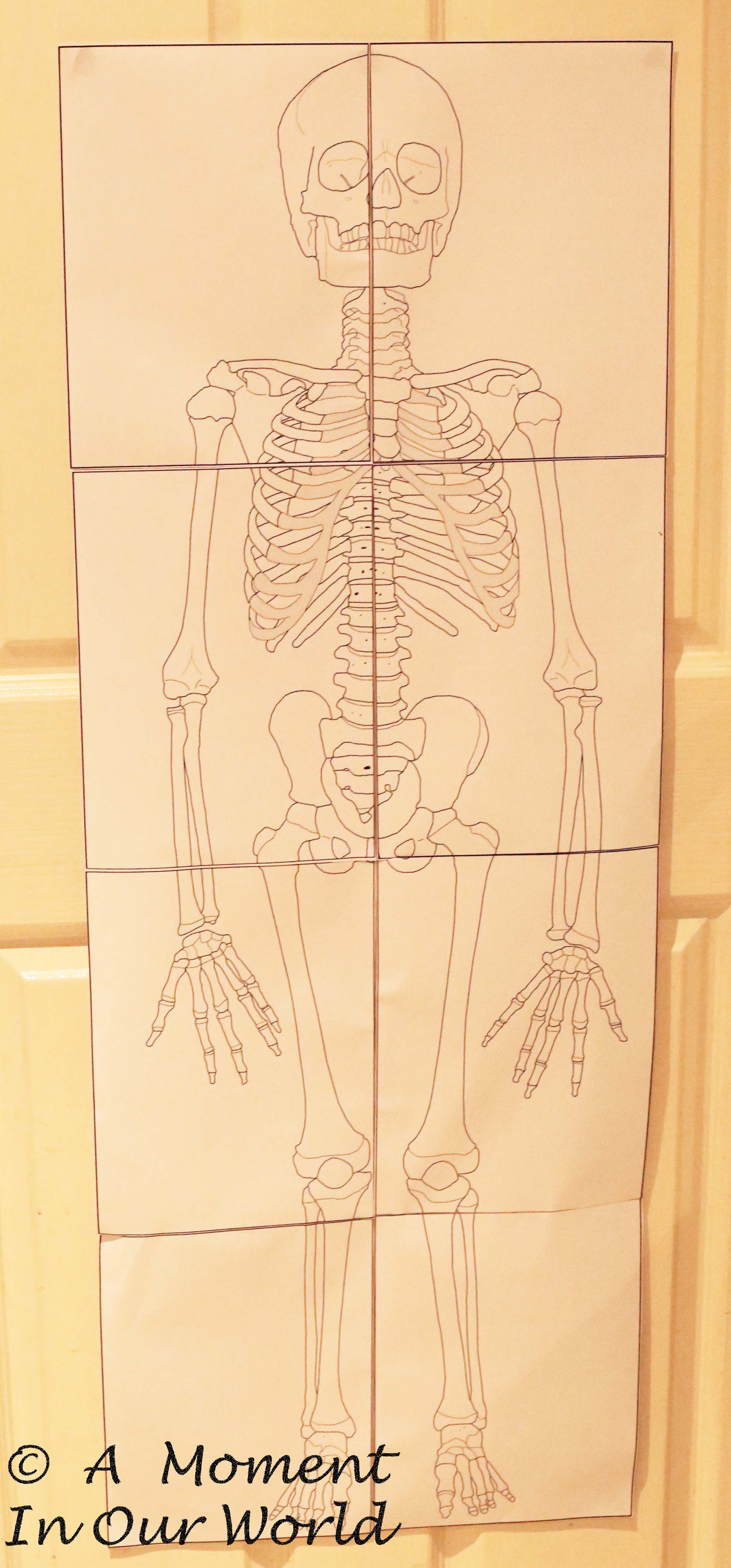 Human Body Bones Joints And Muscles