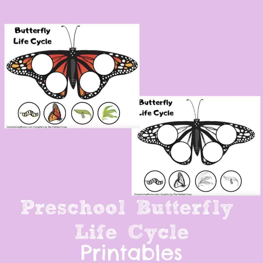 Preschool Butterfly Life Cycle Printables