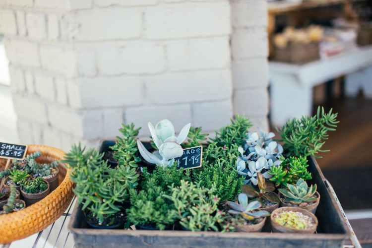little green potted plants near shop for sale