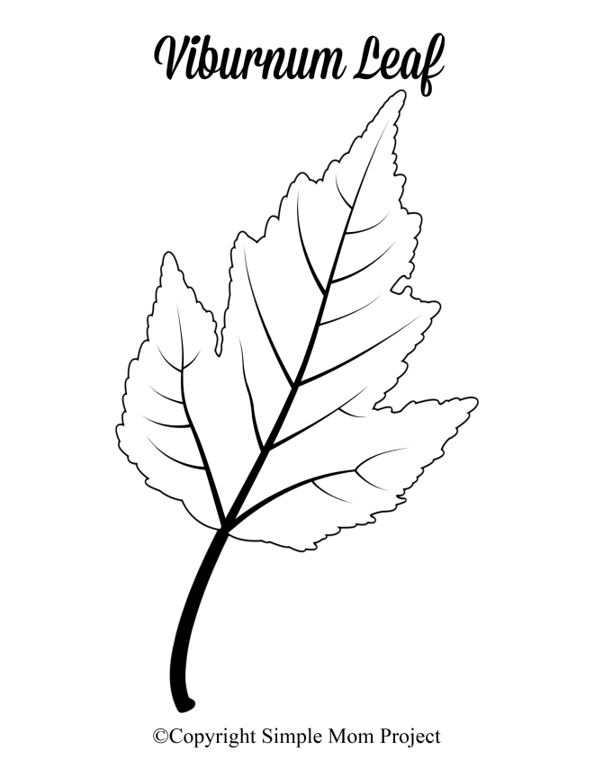Free Printable Large Viburnum Leaf Template