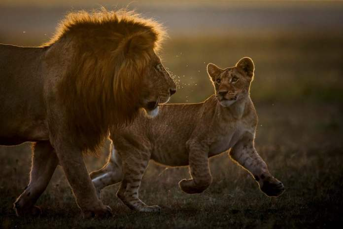 2021 GDT Nature Photographer of the Year