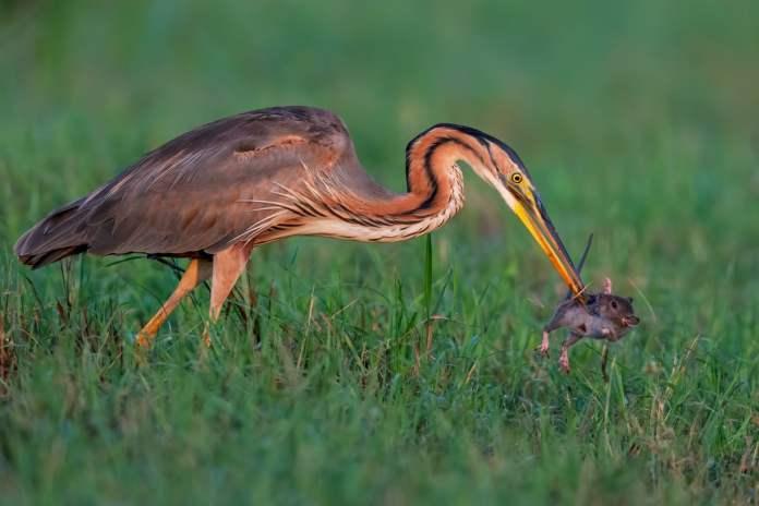 Bird Photographer of the Year 2021