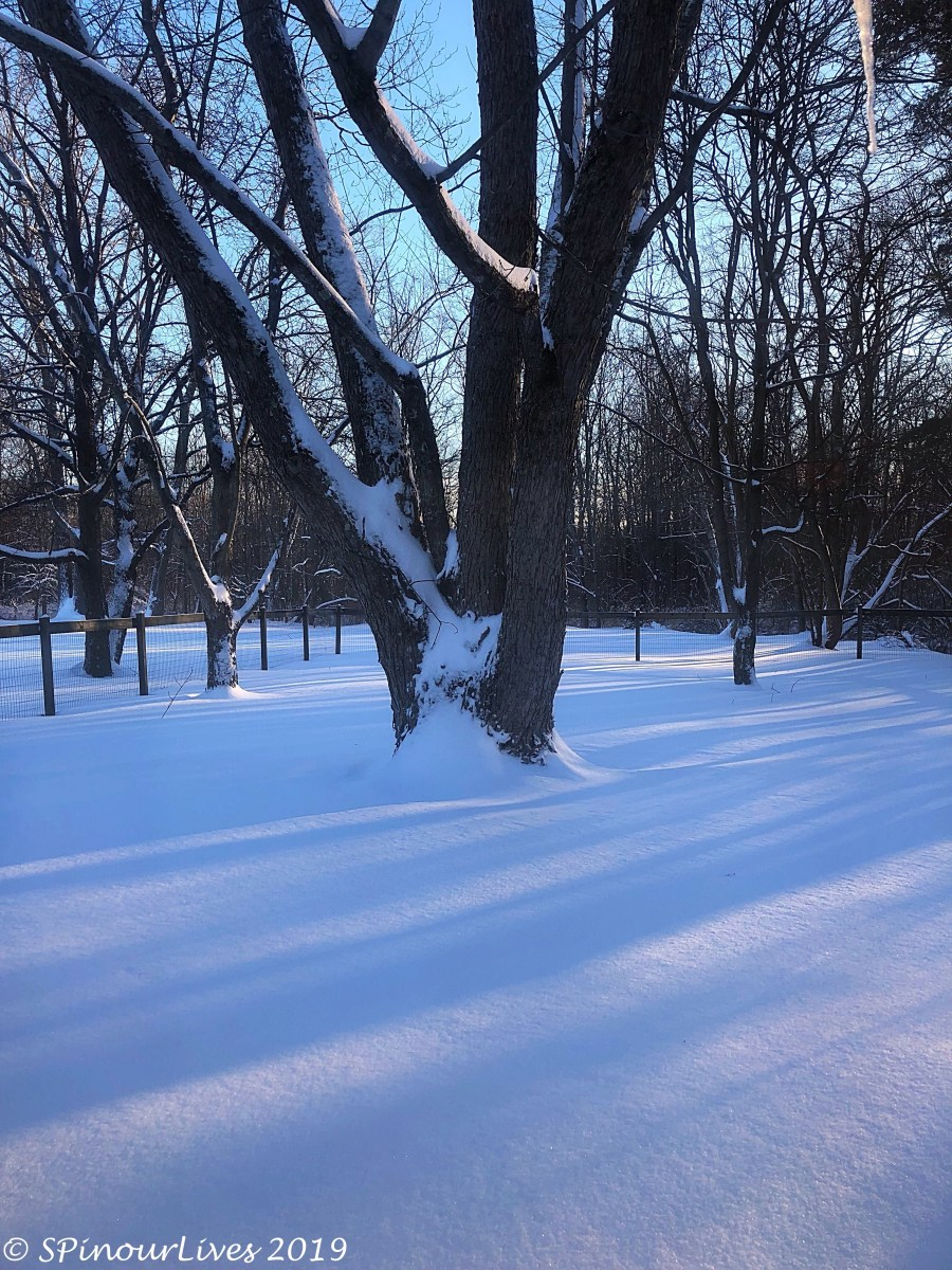 After a Snowstorm
