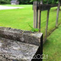 Nimble Grasshopper