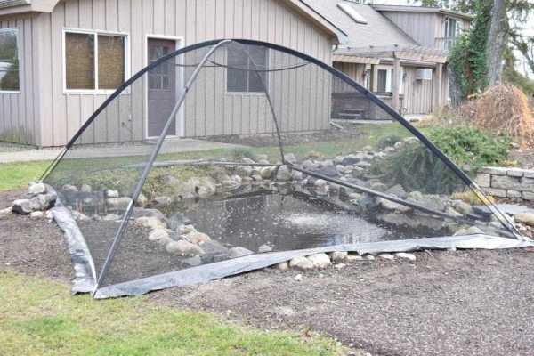 pond tent over pond