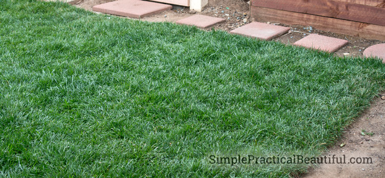 How to put in a beautiful and healthy sod lawn