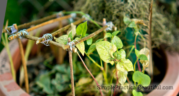 A fairy gazebo makes a beautiful accessory in any fairy garden.