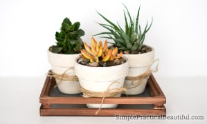 How to make your own DIY succulent planter   Ten succulent gift ideas   Succulents in containers as home decor