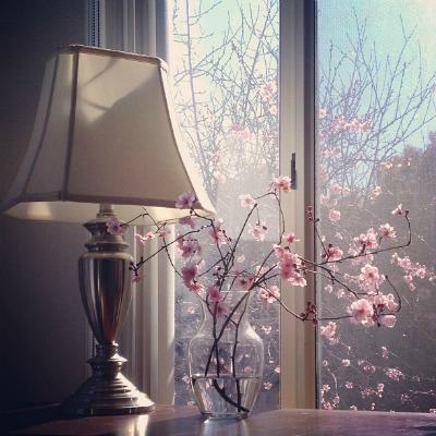 Day 25 - 'On my bedside table' Instagram Sierra filter #springiscoming #fmsphotaday