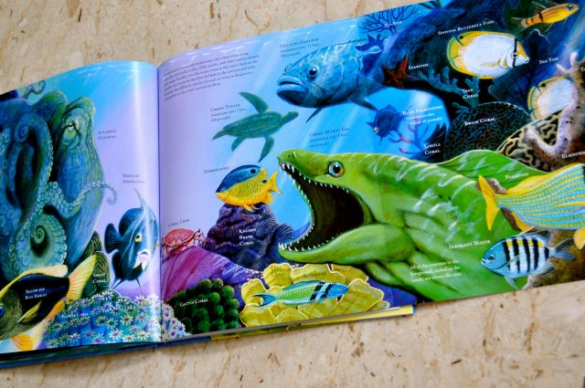 Shimmer & Splash The Sparling World of Sea Life .