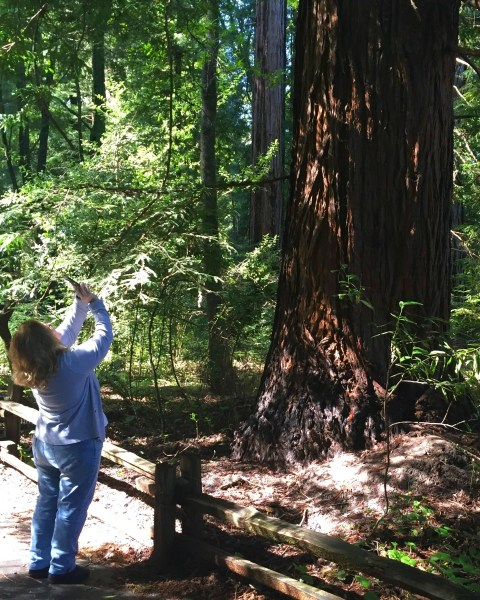 Henry Cowell Redwoods State Park - Simple Sojourns