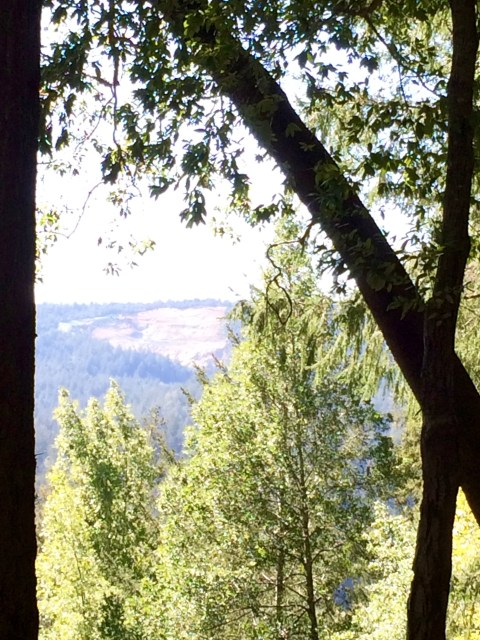roaring-camp-rr-bear-mountain-simple-sojourns