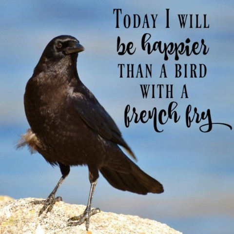Today I will be happier than a bird with a french fry - Simple Sojourns