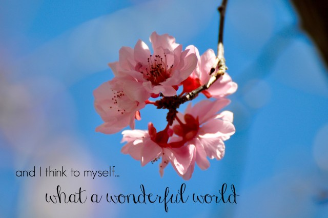 What a Wonderful World - Simple Sojourns