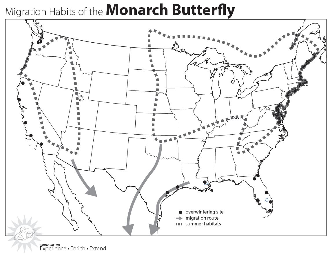Monarch Migration Picture Simple Solutions