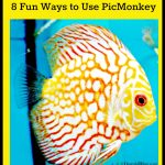 4 Fun Ways to Use PicMonkey