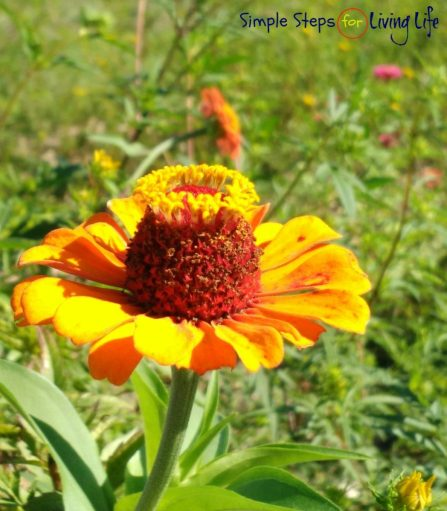 friday-flowers-9-23-2016