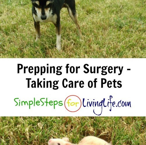 Prepping for Surgery – Taking Care of Pets