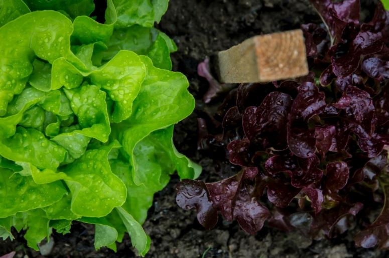 How growing an organic garden can improve your health and budget.