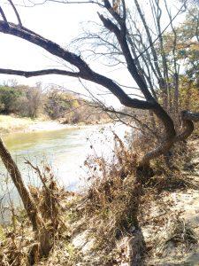 Rrrroar - Dinosaurs in Glen Rose, Texas Review