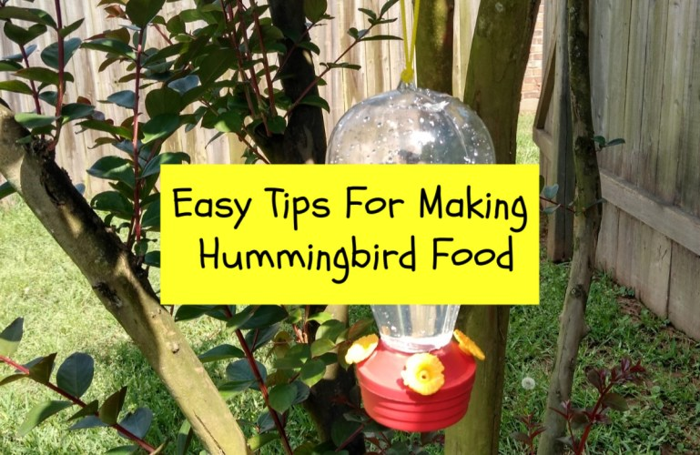 Easy Tips For Making Hummingbird Food