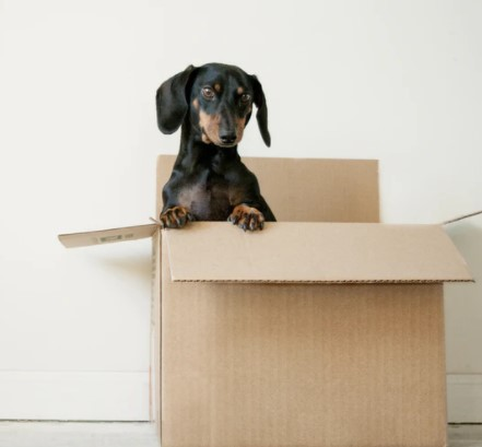 Moving House - Try To Avoid These Potential Disasters