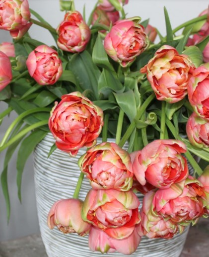 6 Quick and Easy Tips To Planting Tulip