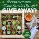 Succulents Box Starter Bundle Giveaway! (ends 10/31)