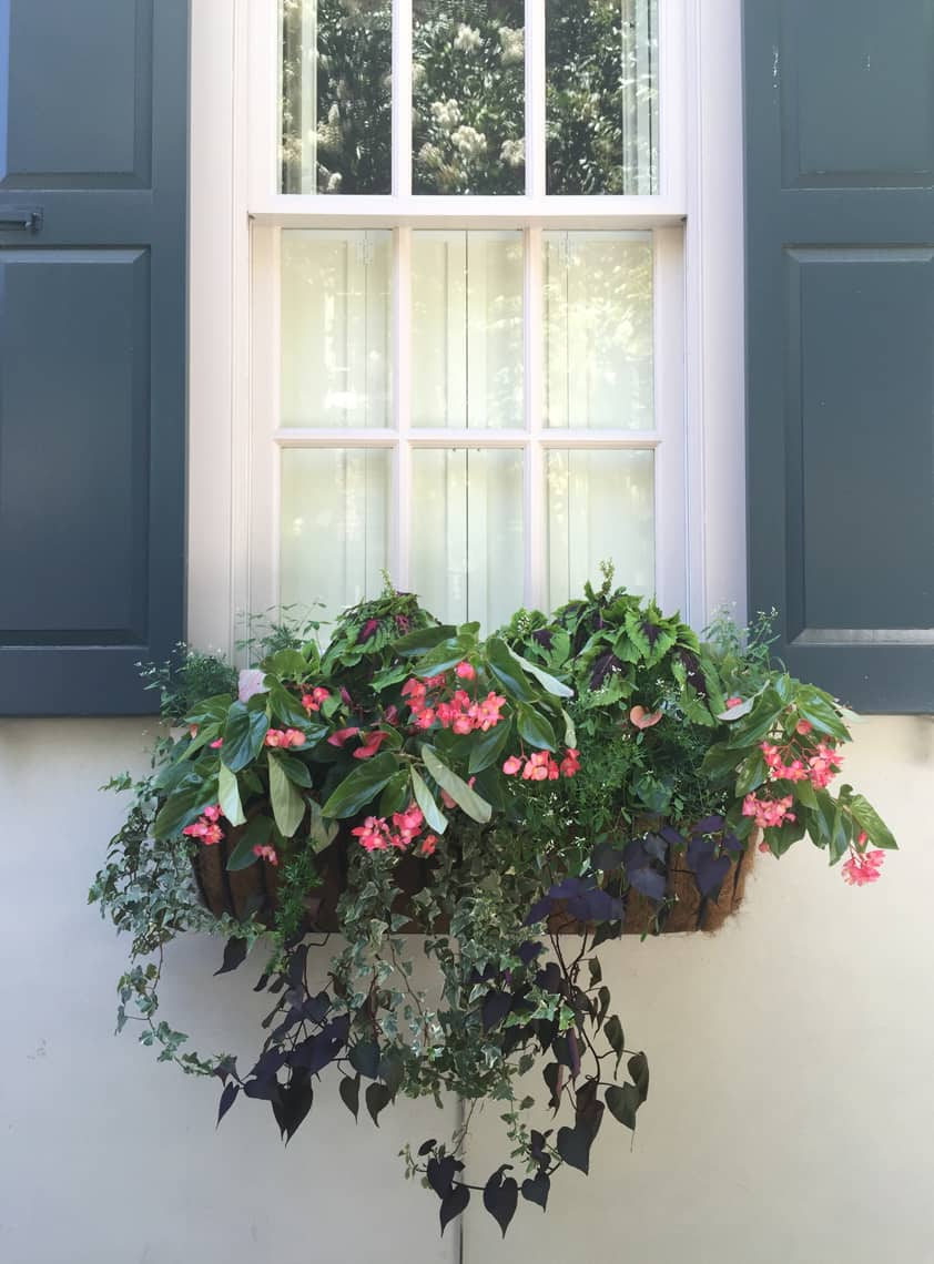 Roadtrip Reality: Charleston Window Boxes Blue