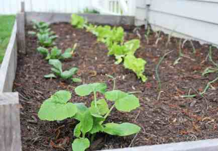 Top 5 Tips For Planting A Raised Bed Vegetable Garden