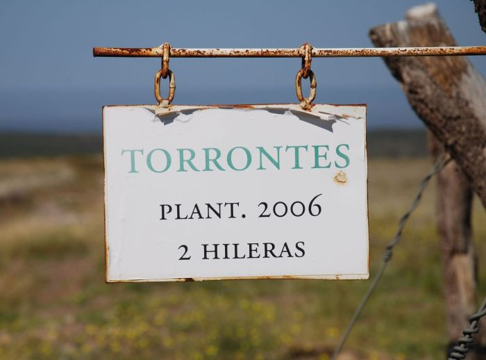 Torrontes-sign-vinalba