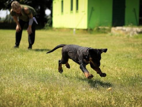 puppy-1517466_960_720