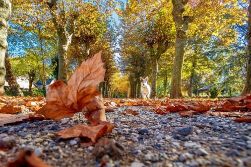 autumn-3098917_960_720