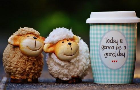 sheep-1644144_960_720.jpg