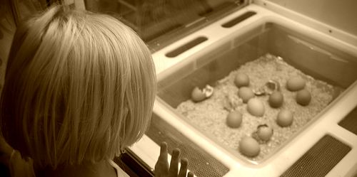 Watching the Hatching, By Troy B Thompson, Via Flickr http://www.flickr.com/photos/troybthompson/44990139/