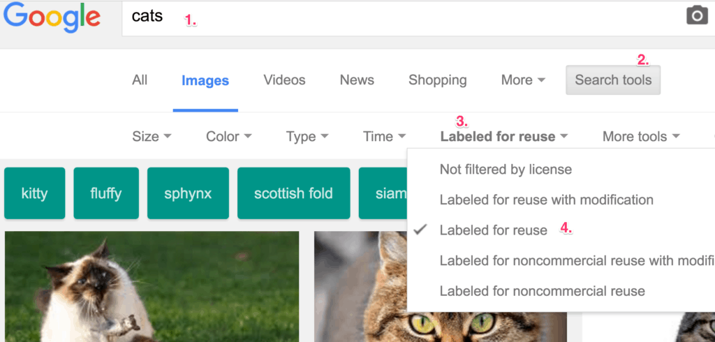 cats_-_google_search