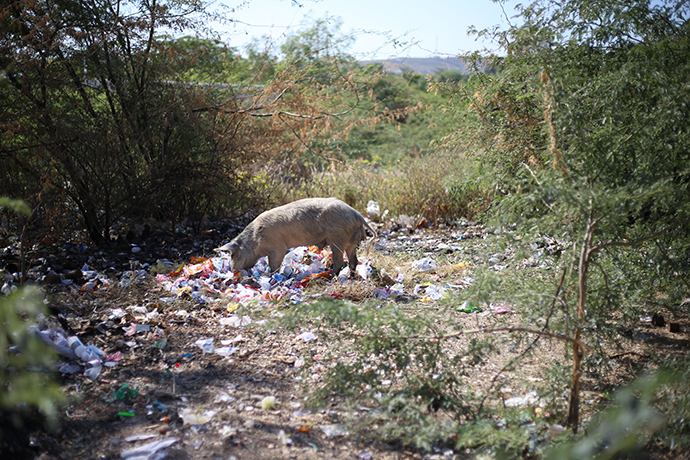 Pig eating plastic in haiti - How to Properly Recycle