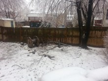 Limbs down in our backyard.