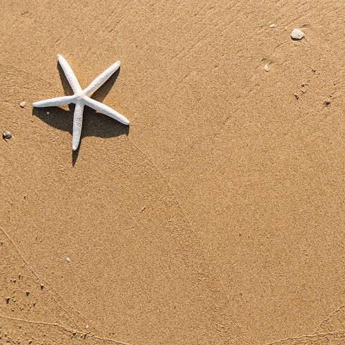 a starfish on sand