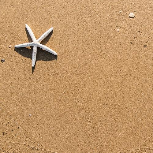 a starfish on sand