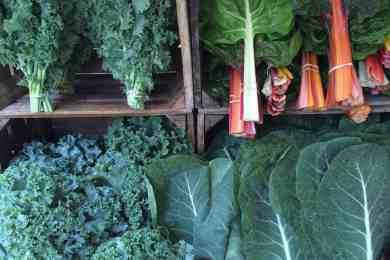 Why farmers go organic 31