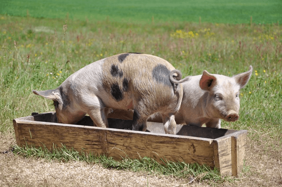 Welcome to the trough 1