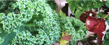 WEBINAR | Kale + Kryptonite
