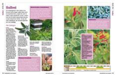 Gartentipp: Salbei