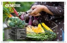 Gartentipp: Gemüse anpflanzen