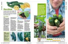 Gartentipp: Zucchini
