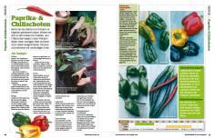 Gartentipp: Paprika- und Chilischoten