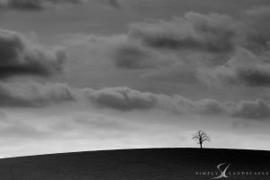 lone tree on hill