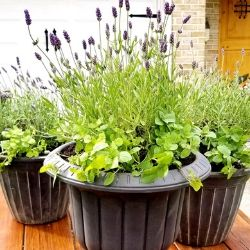 mosquito repellent patio planter