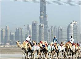german camels city